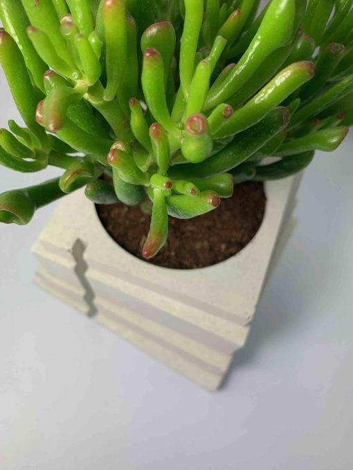 Pot design en béton blanc par Blackbeton